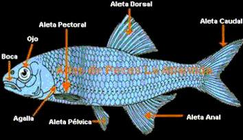 funciones de los peces: